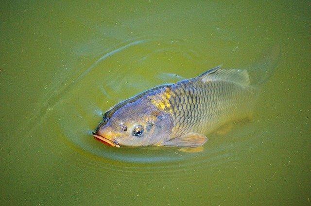 ryba se objeví