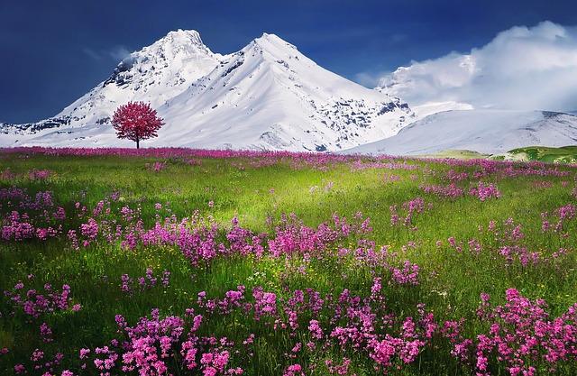 louka v Alpách